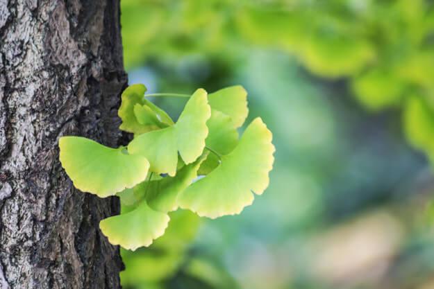 hypnose lyon developpement personnel shiatsu magnétisme méditation fleurs de bach interprétation des reves